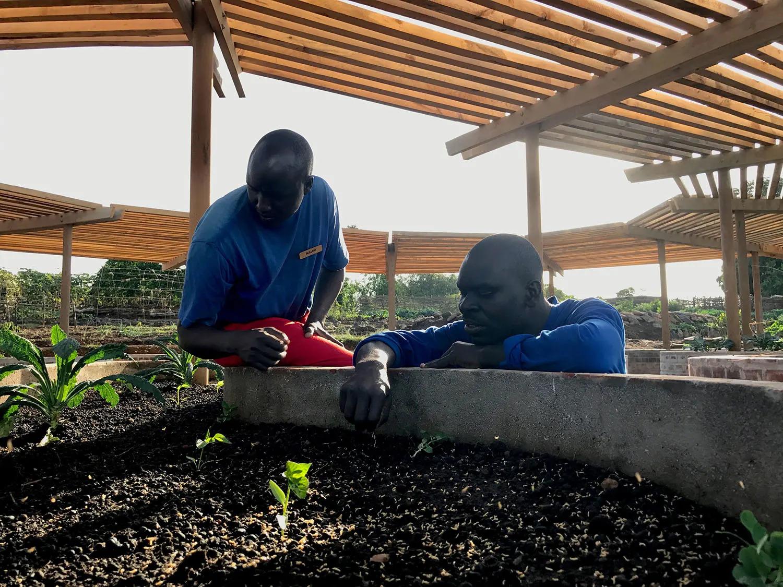 Seedlings in calabash