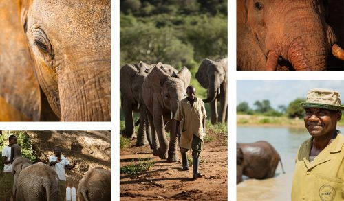 Walking, feeding, swimming, bathing - all in a days work for Benjamin and his colleagues at the Ithumba Reintegration Unit