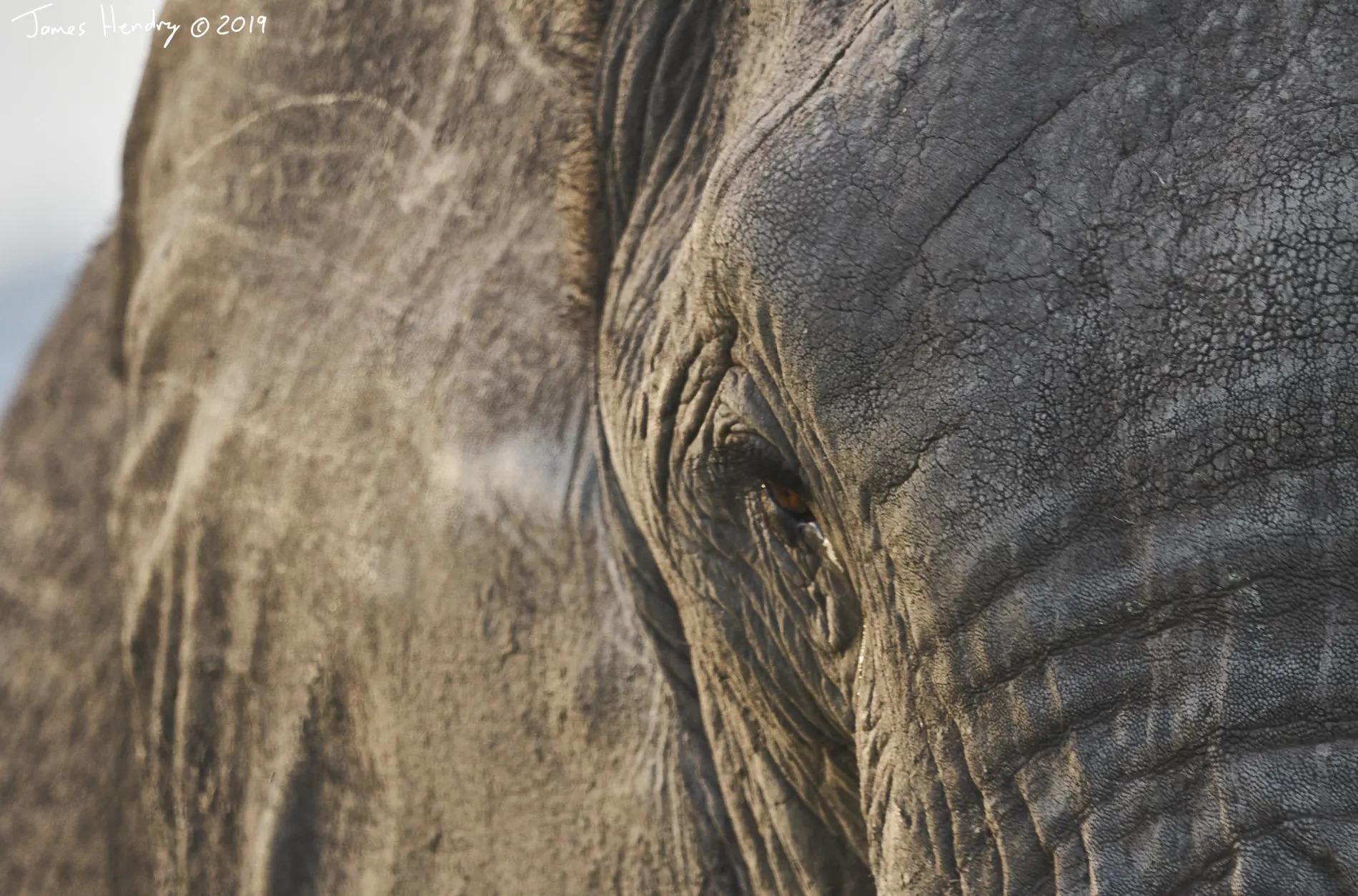 James Hendry_Elephant