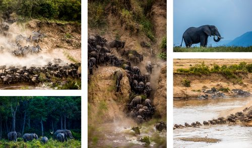 From dramatic crossings to peaceful elephant scenes, we saw it all. Photographs by Josh Kisamwa