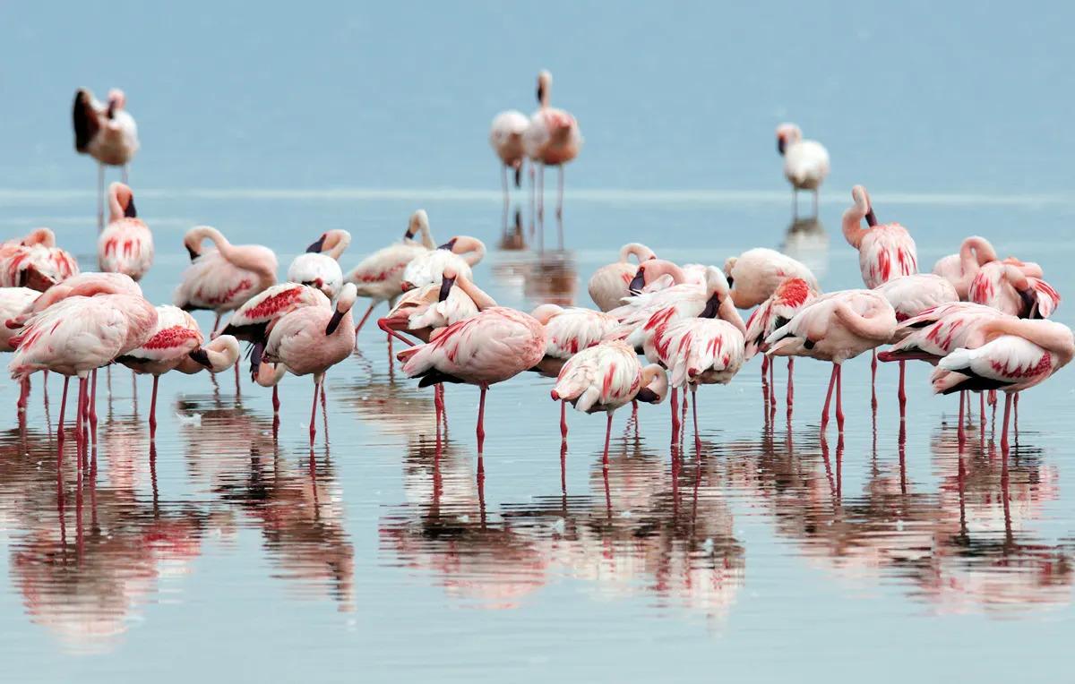 Flamingos along the Great Rift Valley Lakes