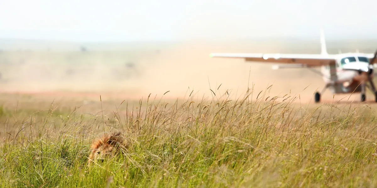 Lion in the grass at Kichwa Tembo Airstrip