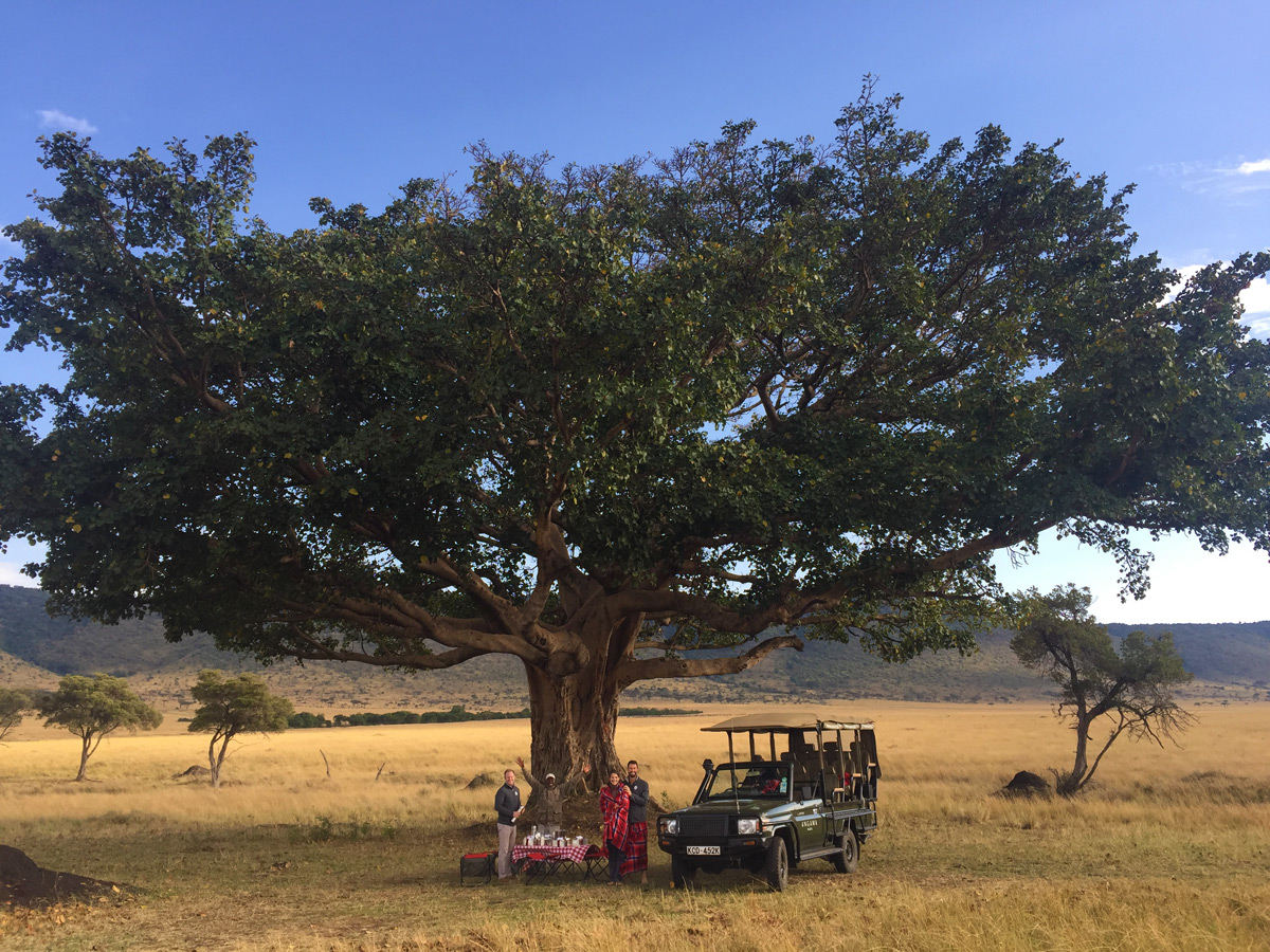 Lunch-under-a-fig-tree