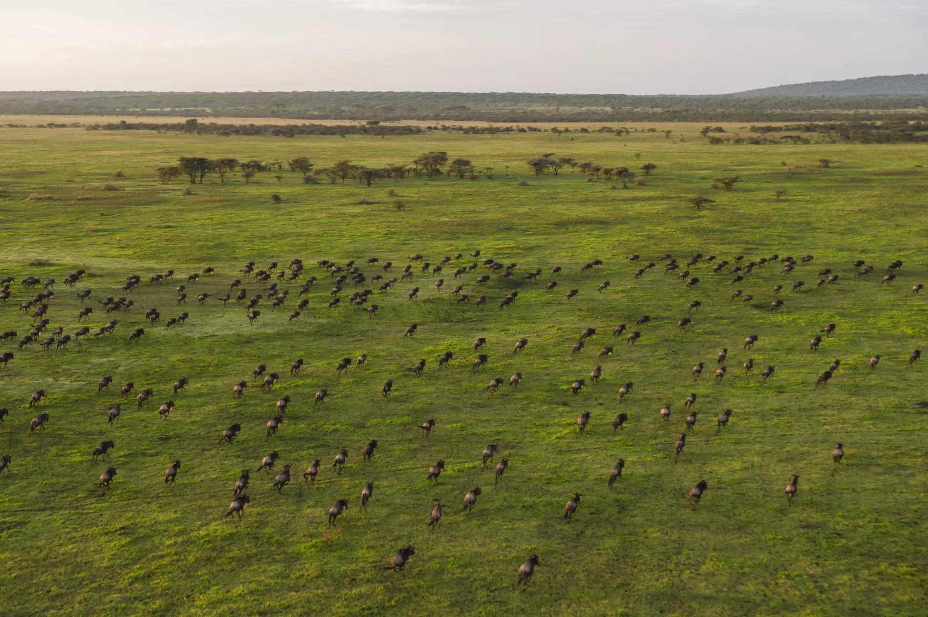Mwiba Migration 1