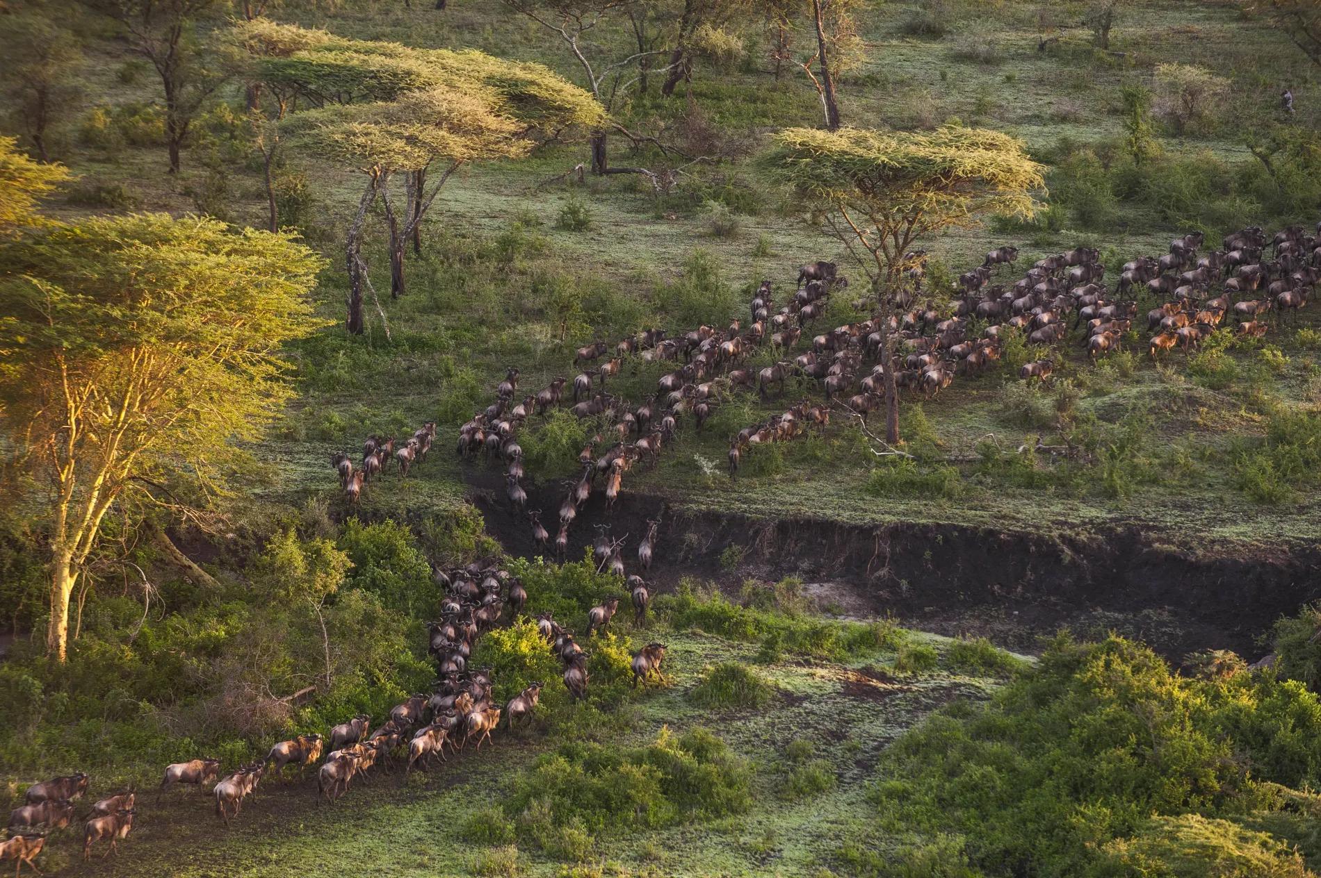 Mwiba Migration