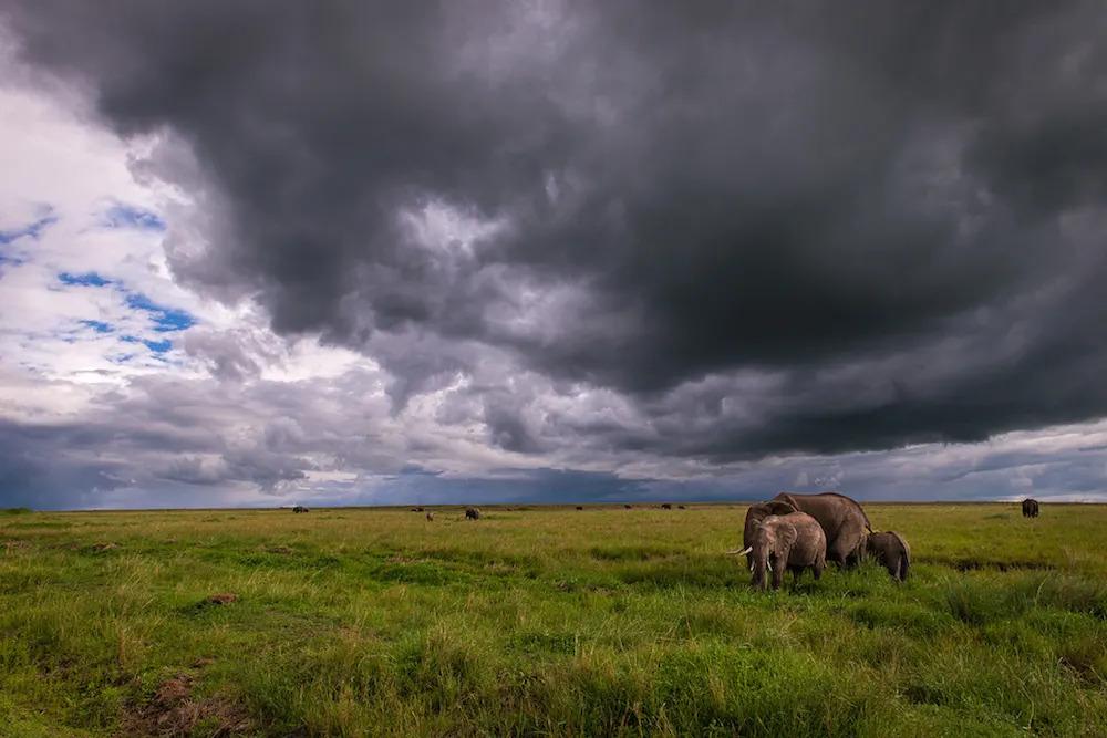 mara-elephants-in-the-rain