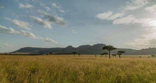A typical Mara landscape captured by James Walsh