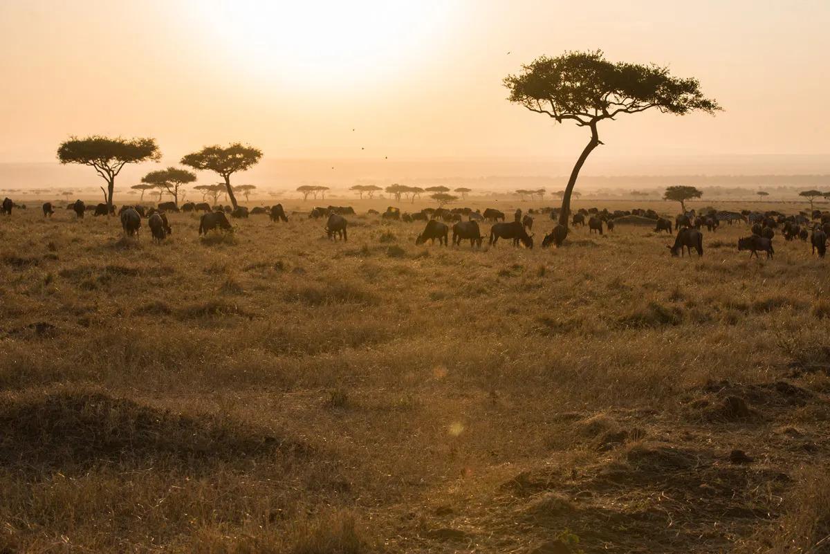 Migration at Sunset