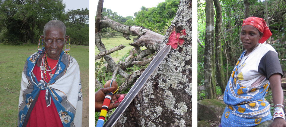 Moth-tree-and-Maasai-Women