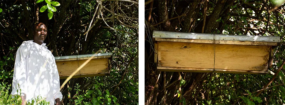 Naliki and Hive