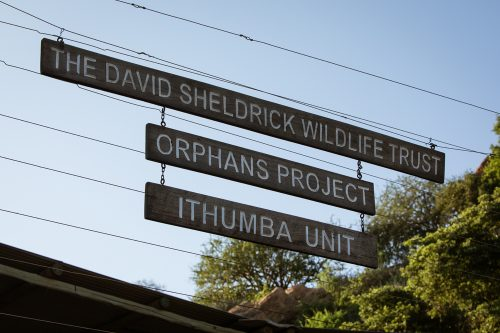 The David Sheldrick Ithumba Camp in Tsavo East National Park