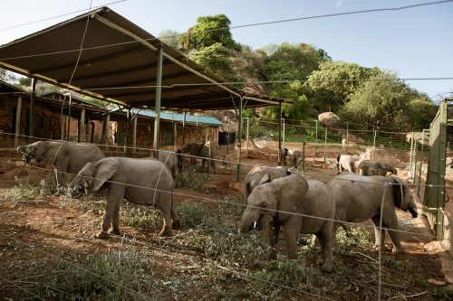 Secure enclosures where the orphaned elephants are housed at night