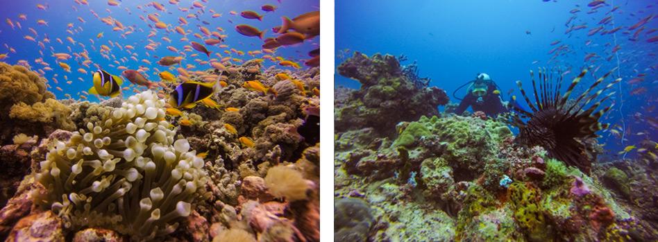 Pemba---Diving