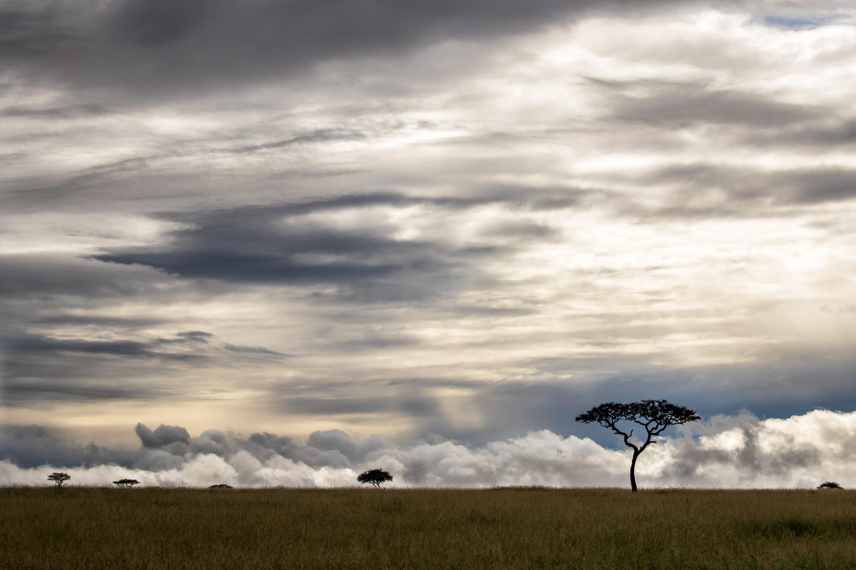 Quintessential Mara Landscape