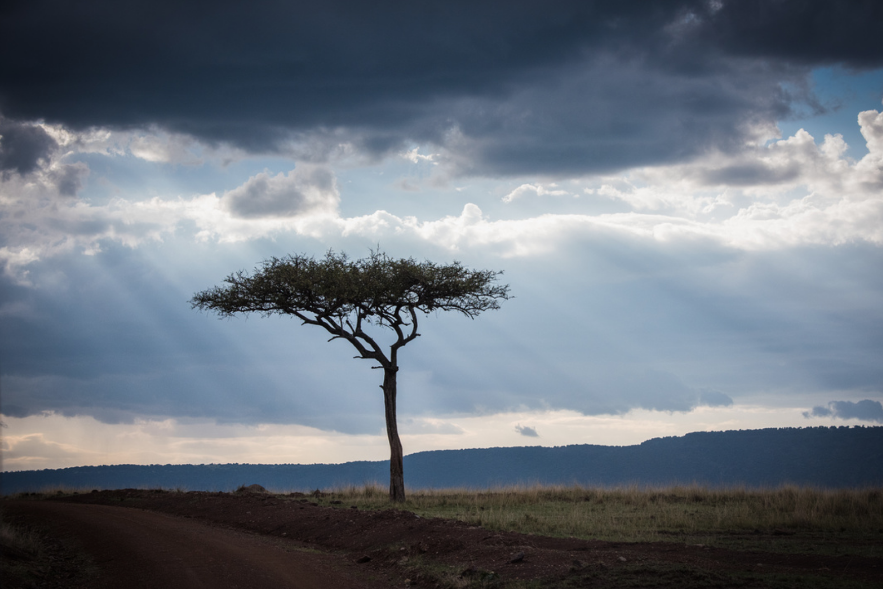 Moody trees in the Mara
