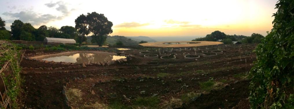 The shamba at sunrise