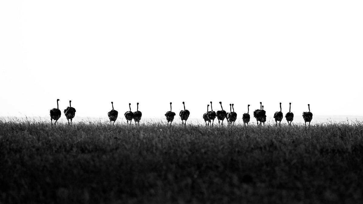 '18 Heads' by Harman Singh Heer