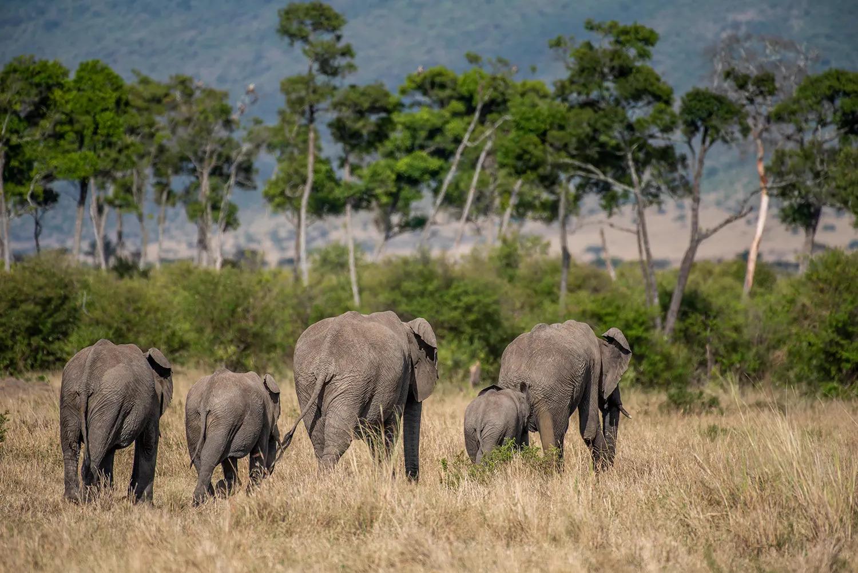 TNW_14_10_2018_Elephant Herd