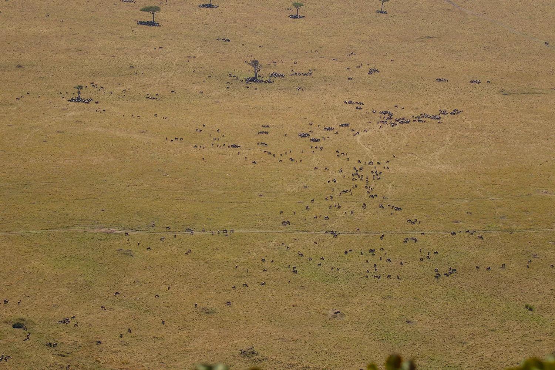 TNW_14_10_2018_Wildebeest Herd