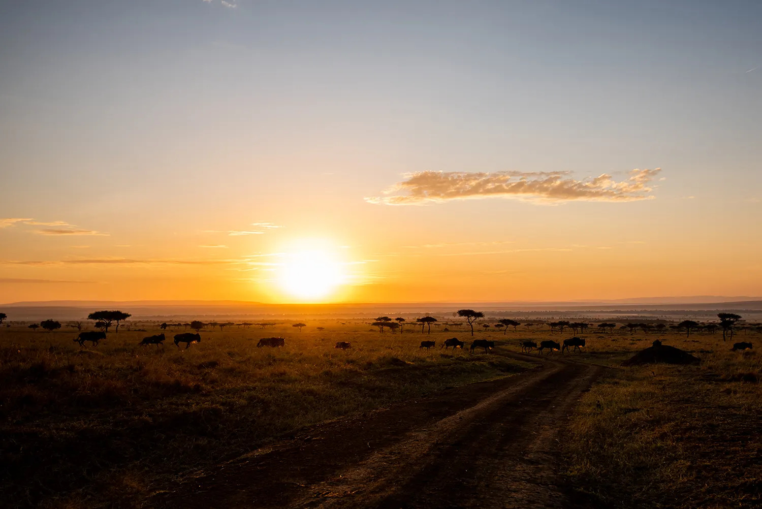 TNW_16_10_2018_Mara Sunrise Wildebeest