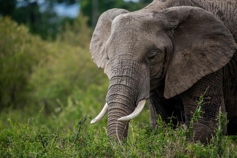 TNW_16_10_2018_elephant