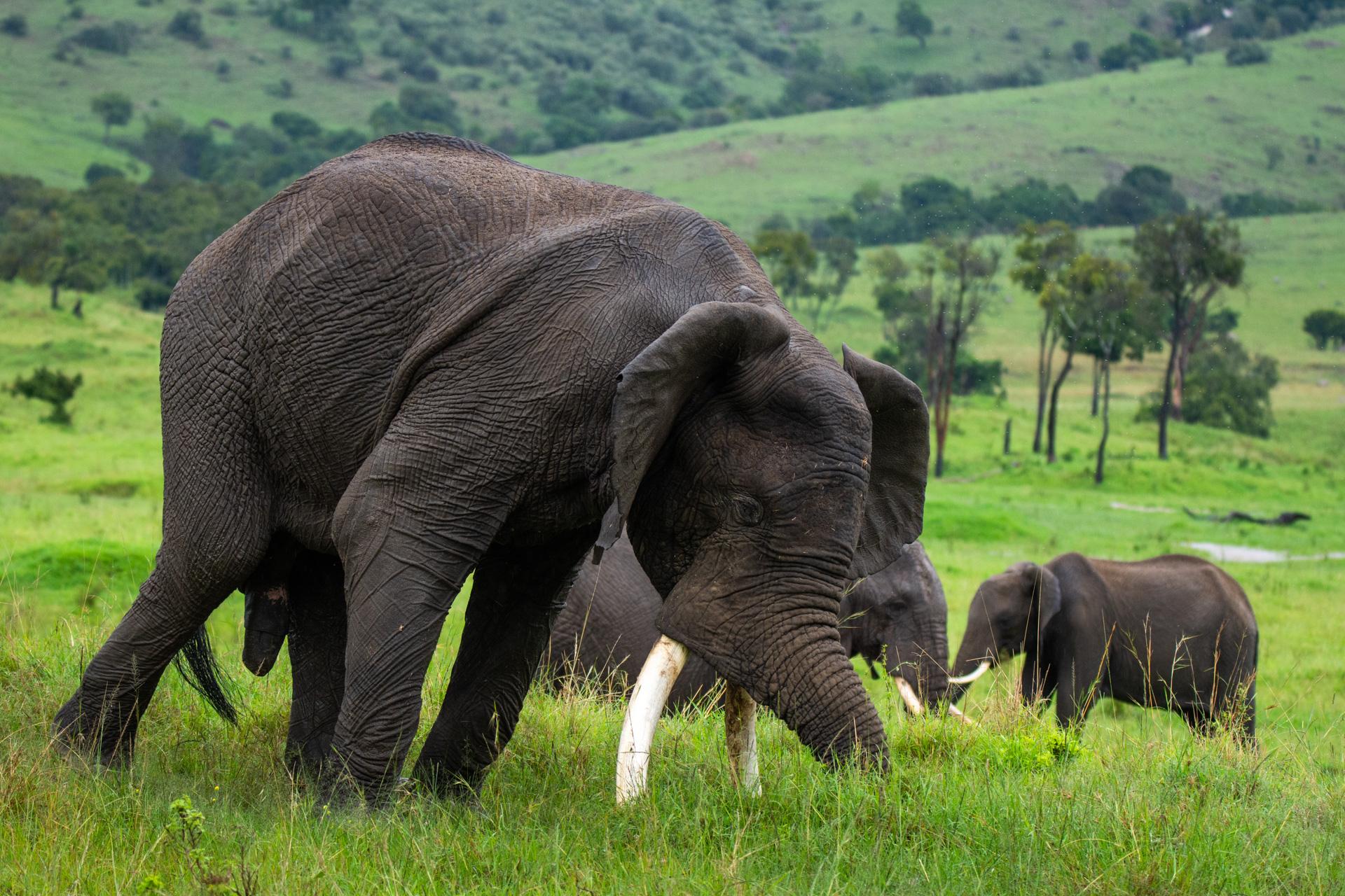 falling elephant