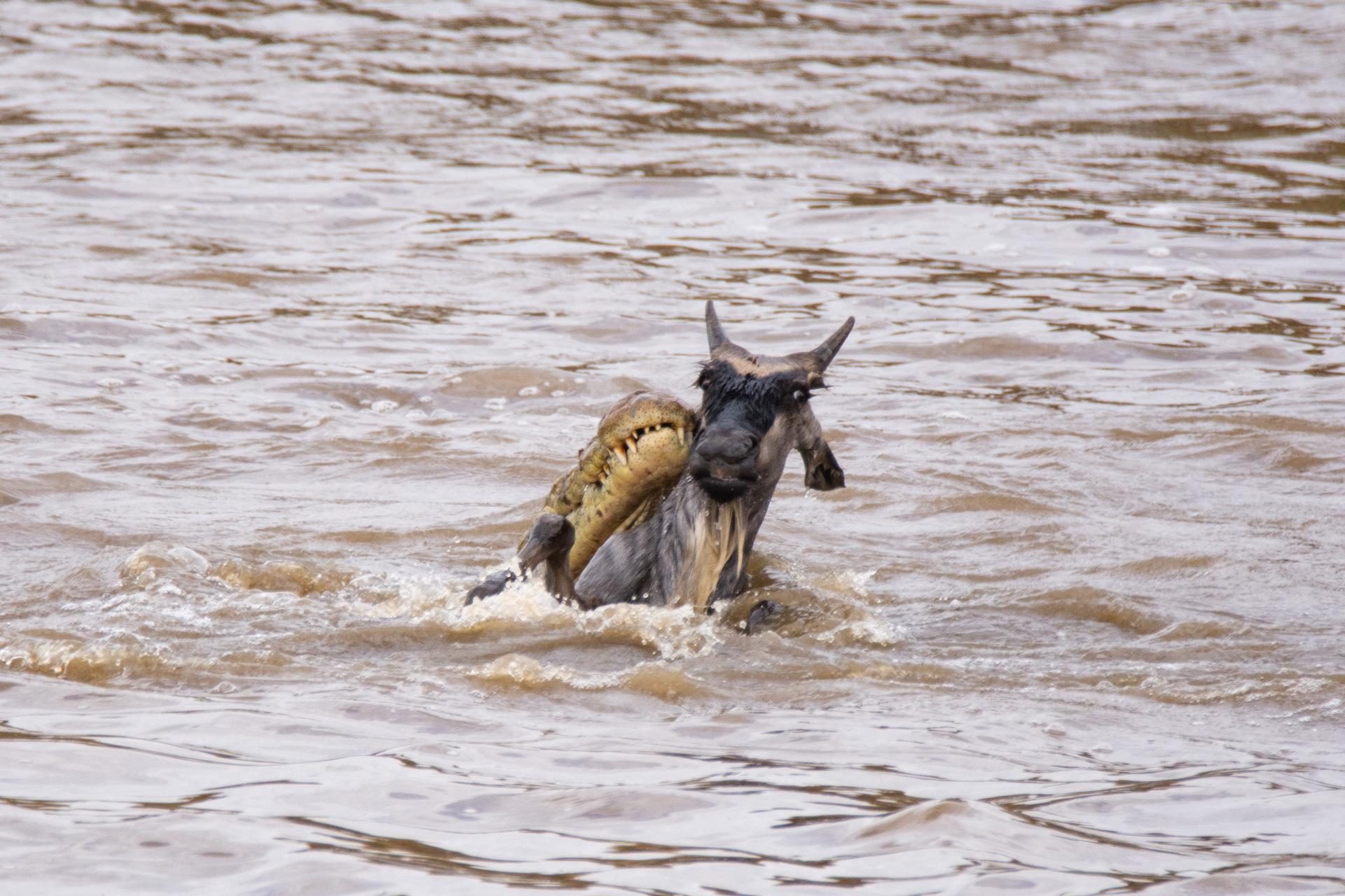 Wilde croc river