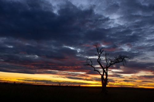 A glorious sunset in the Mara