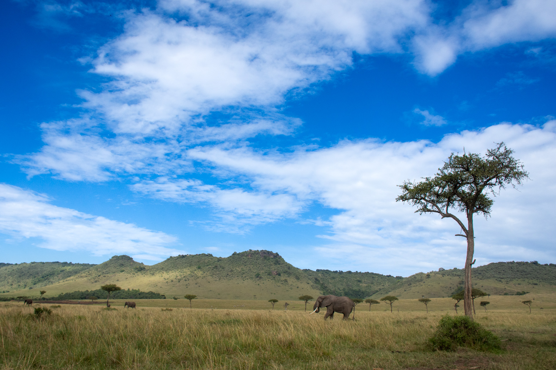 Elephant and landscape