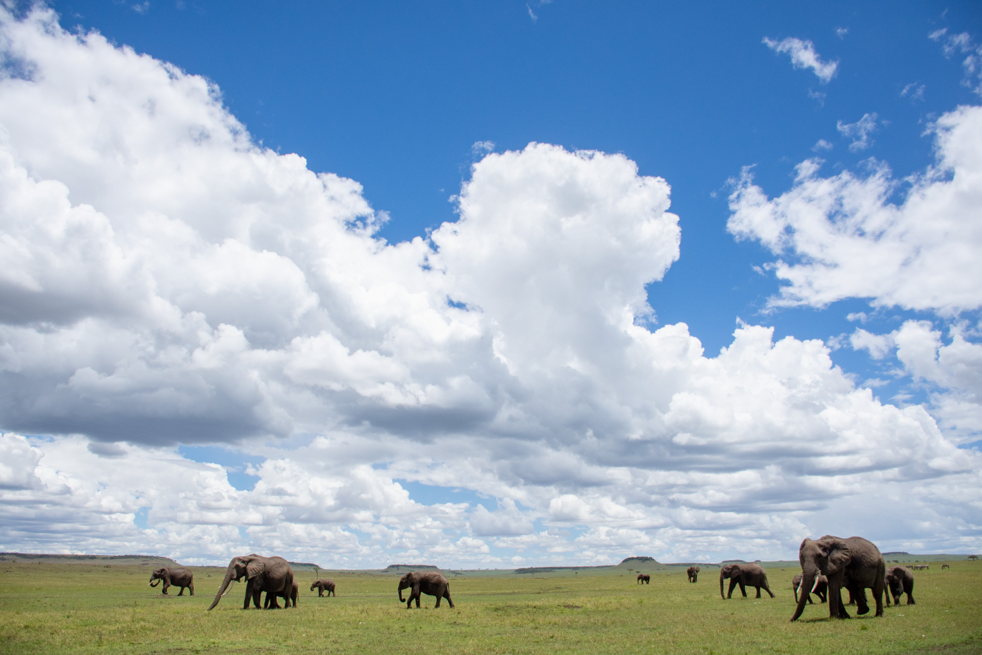 Elephants wide angle