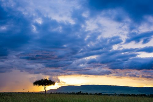A lone ballanite tree in the midst of a dramatic Mara sunset