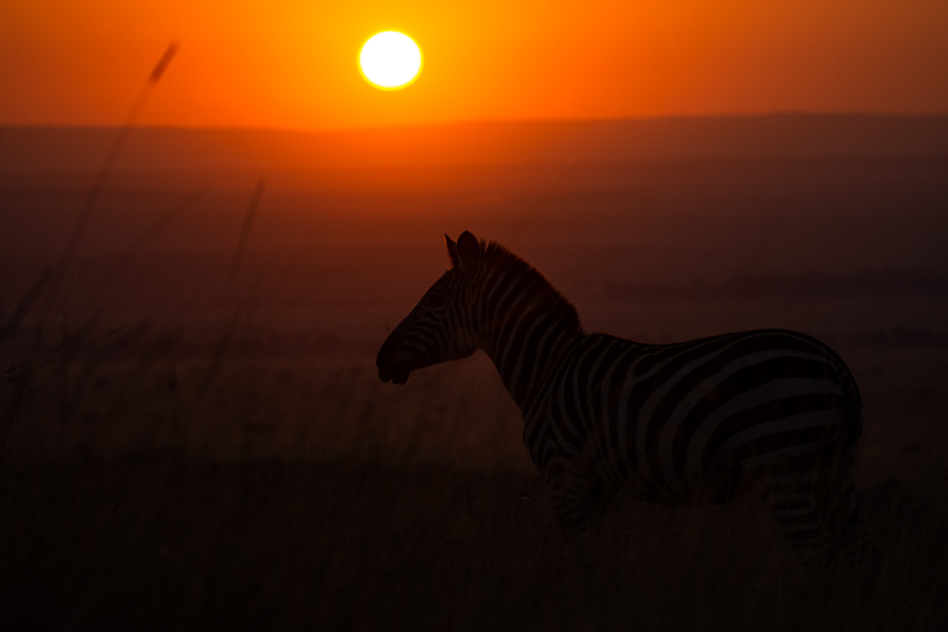 Red skies and zebra
