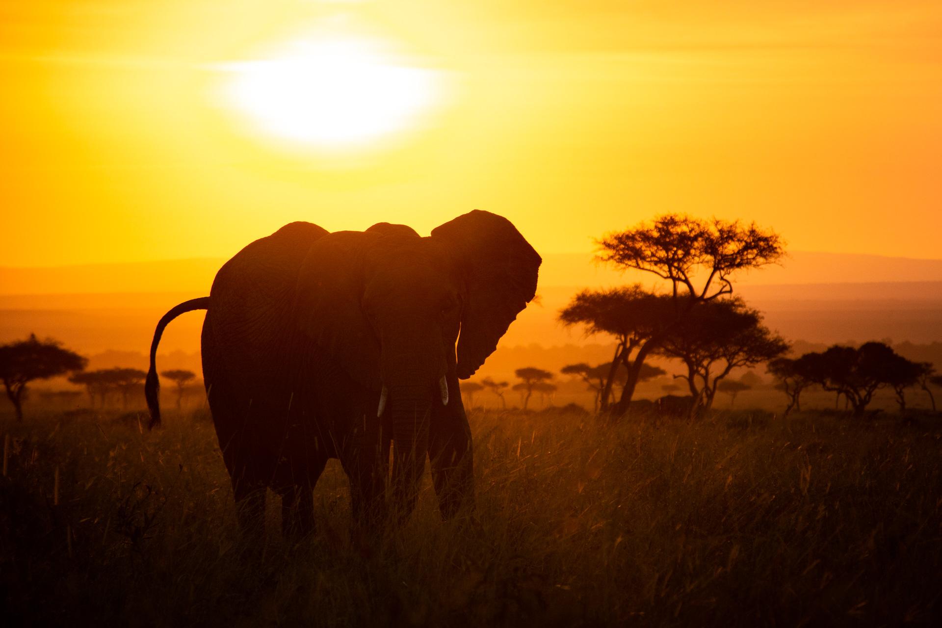 More elephants at sunrise