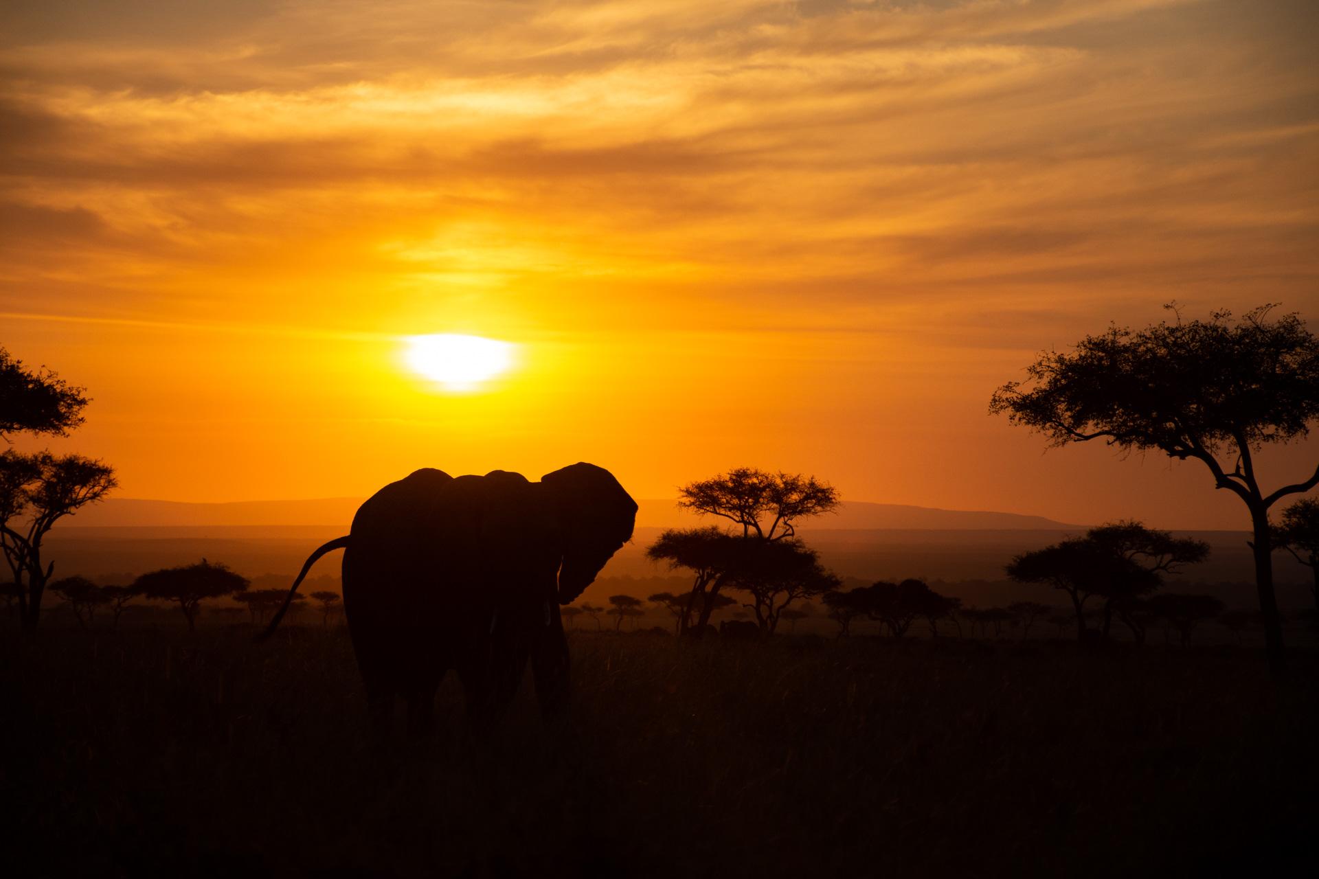 Orange sunrise with elephants