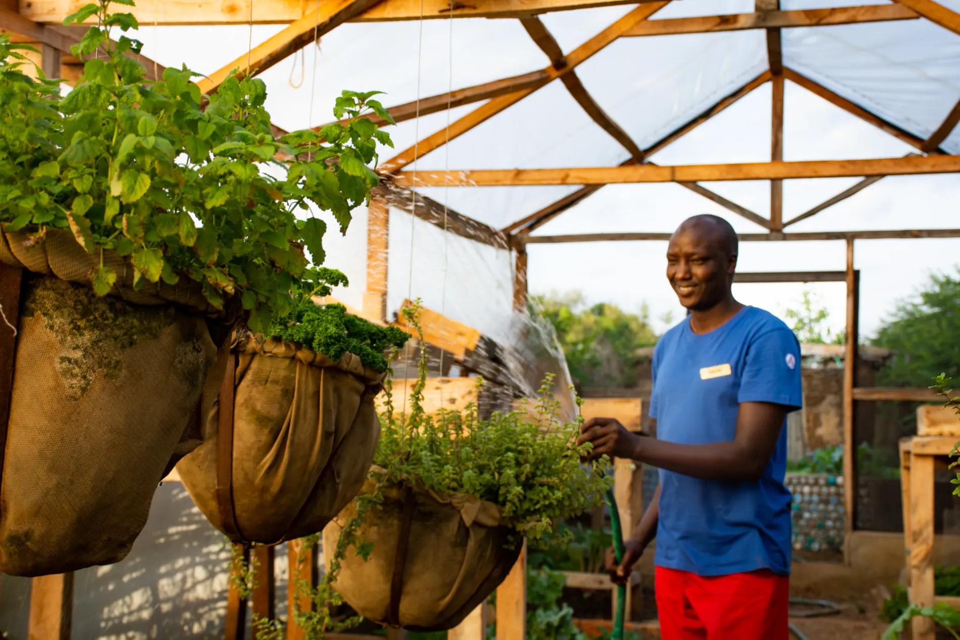 Naliki watering in greenhouse