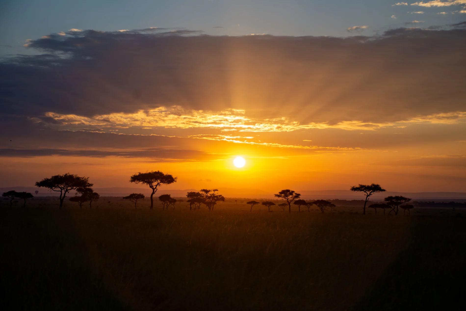 Balanites sunrise