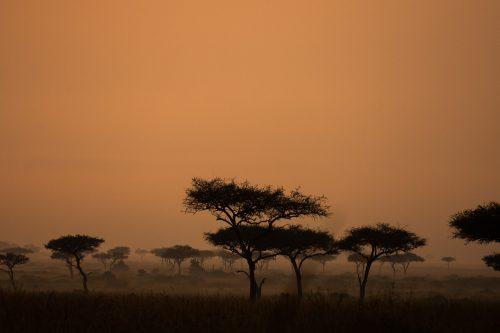 Sunset in the Mara