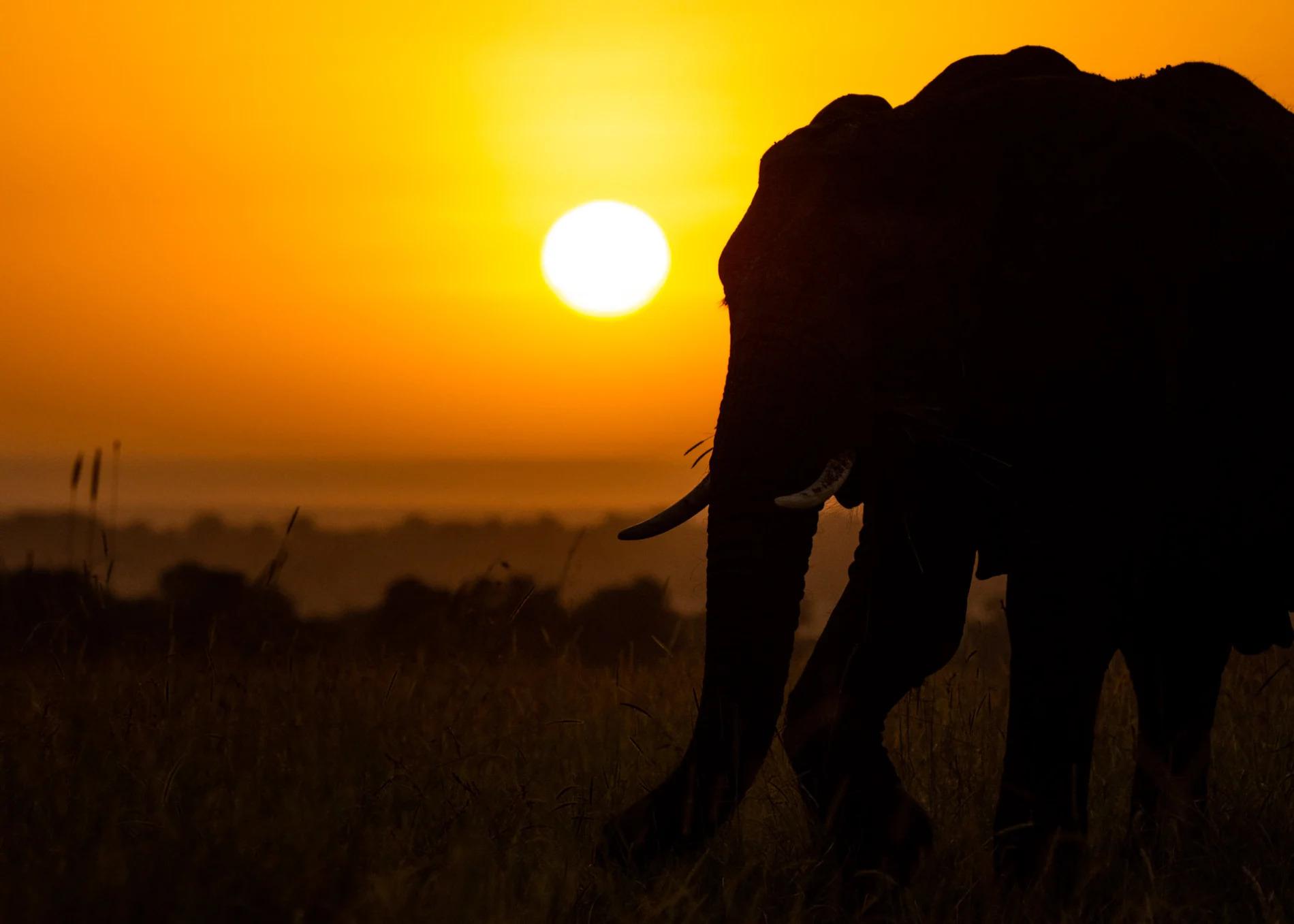 Sunrise elephant