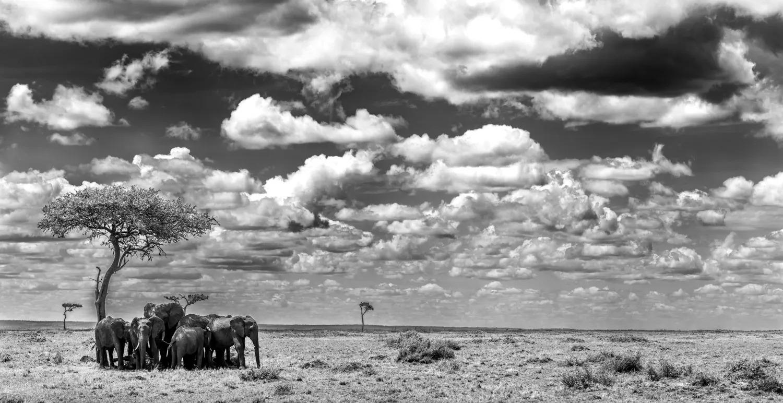 ELEPHANT_PANO