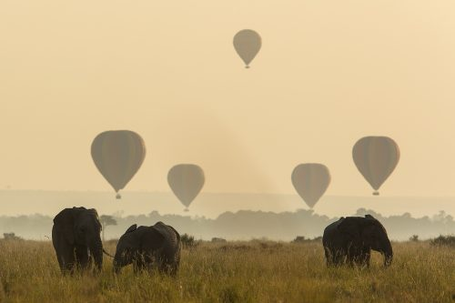 Hot air balloons and elephants at sunrise – Adam Bannister