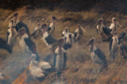Storks after the burn – Adam Bannister