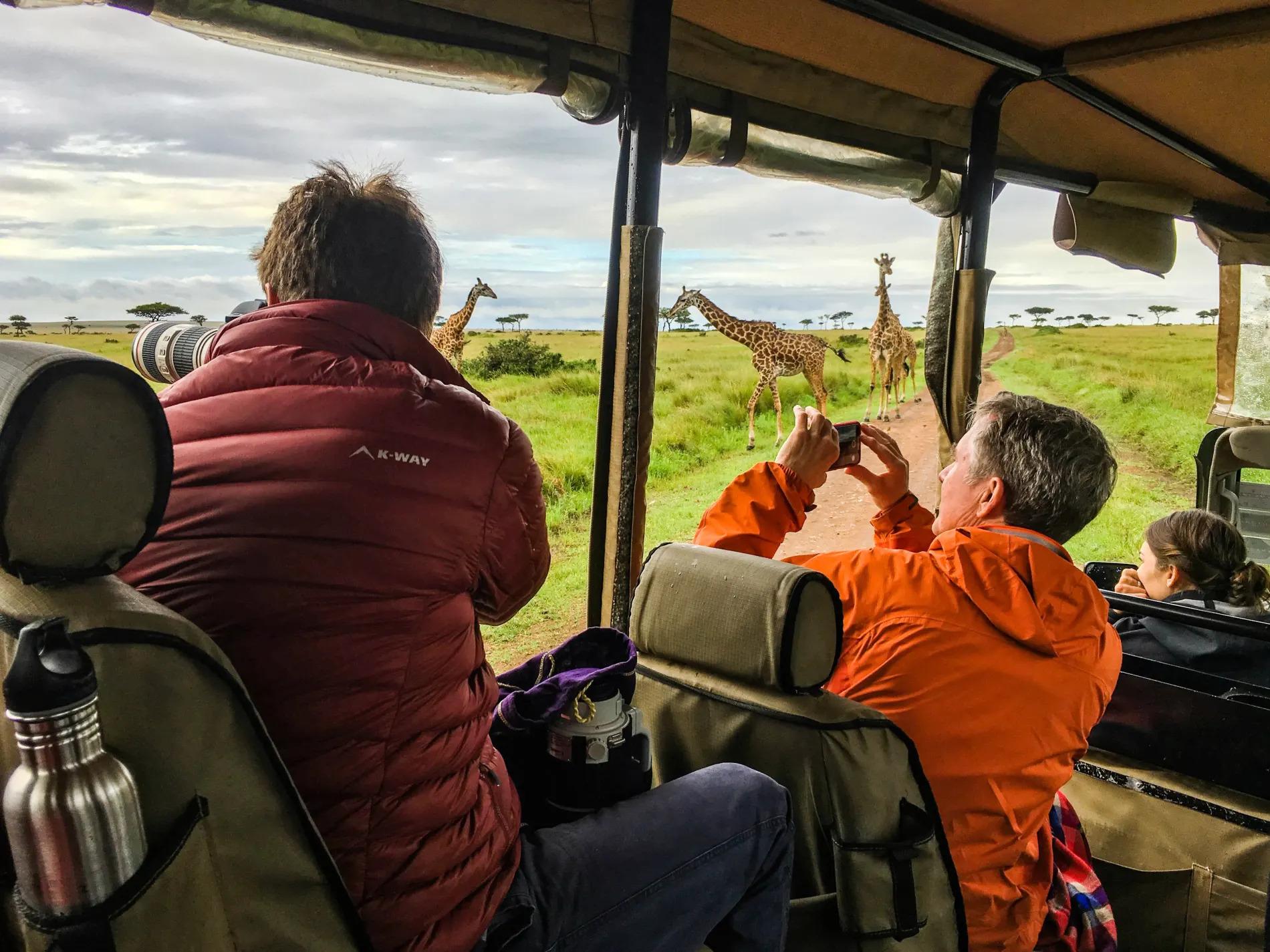 Taking pics of giraffes