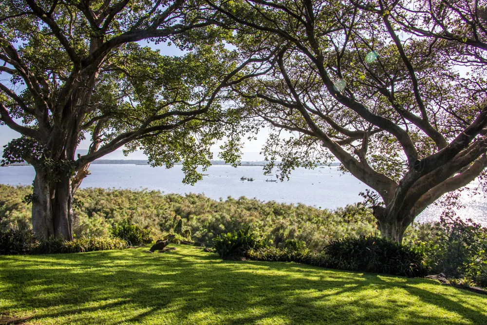 Trees on Lake Naivasha