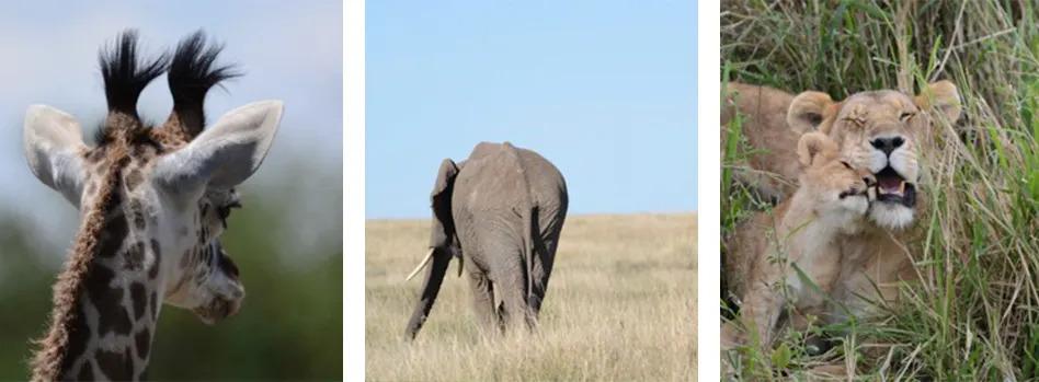 Wildlife on Safari