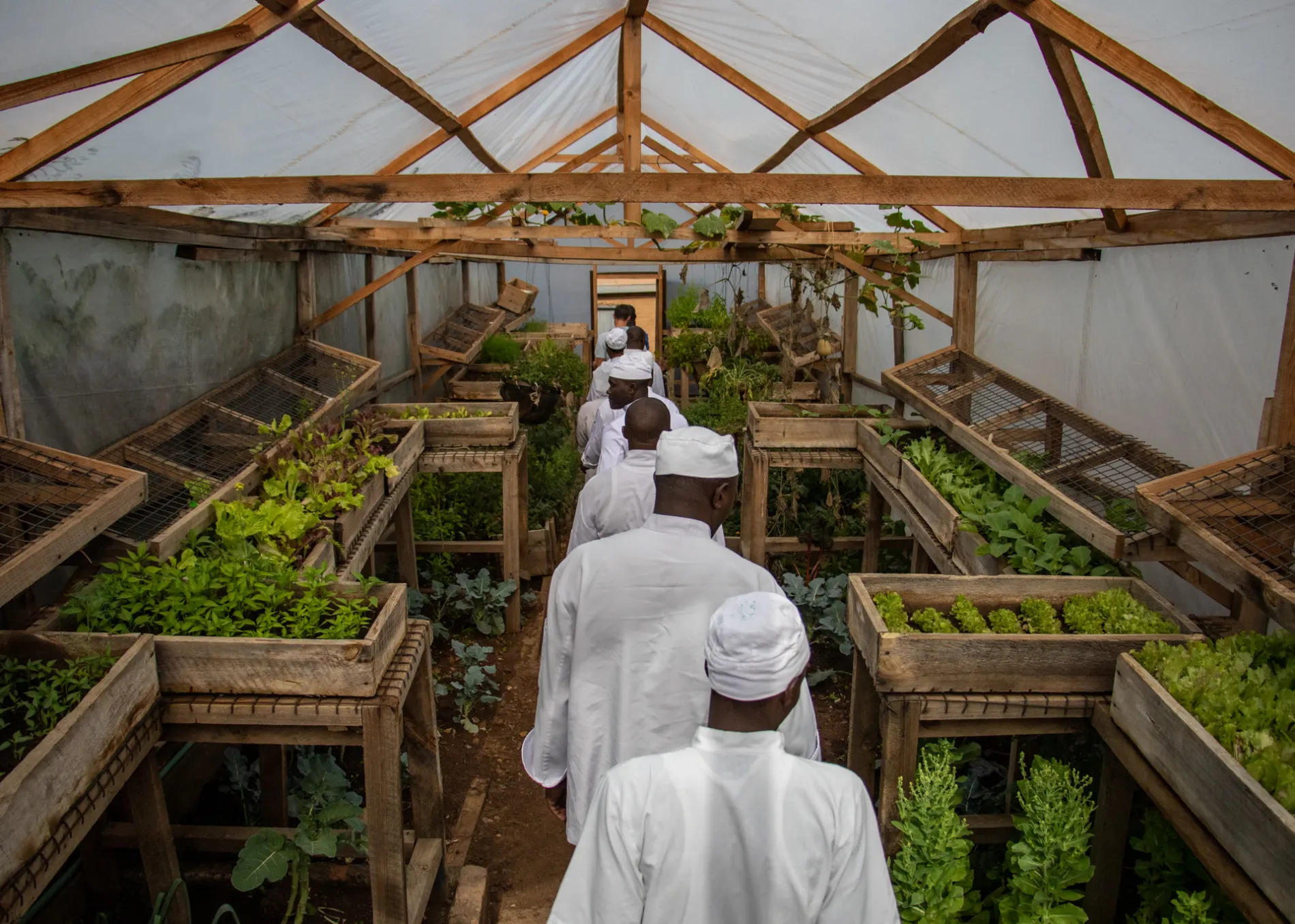 Chefs in the Green House