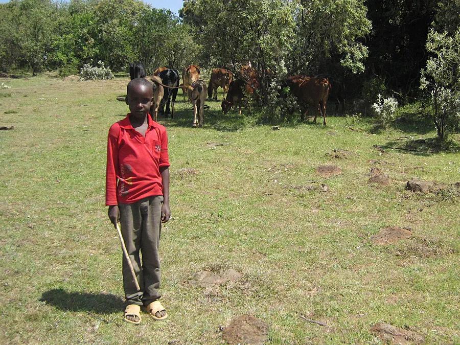 Young Maasai Herdsman