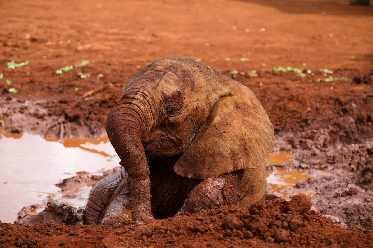 Enkesha in the mud