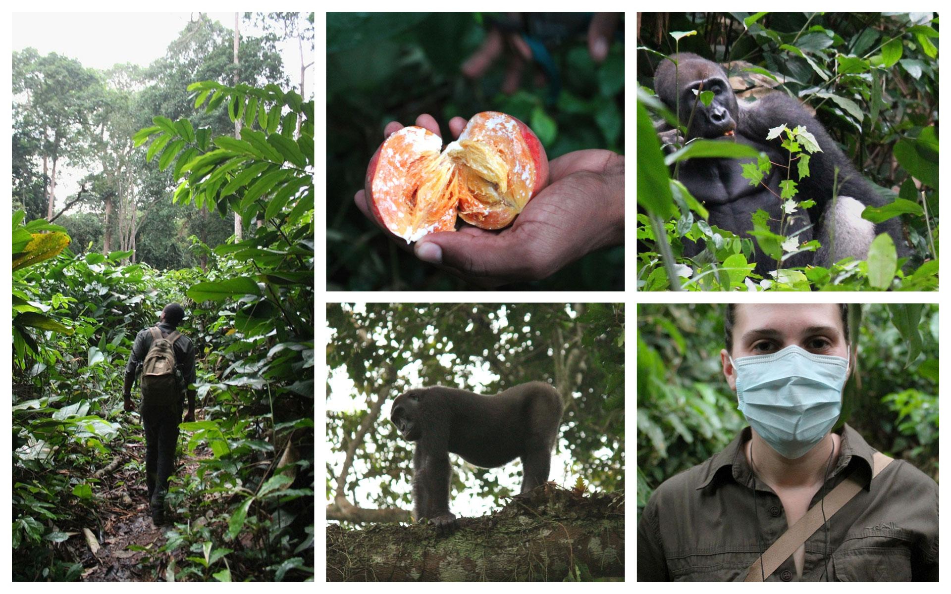 gorilla-collage