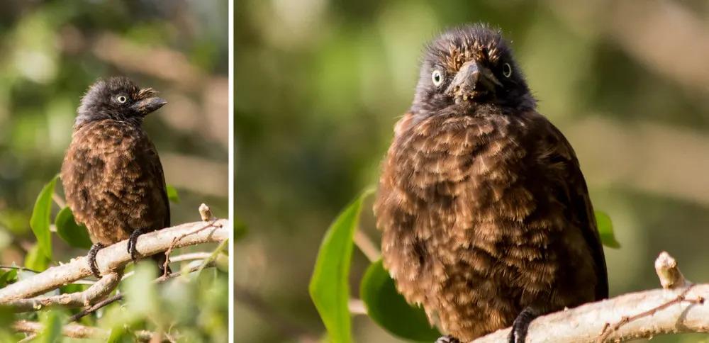 Angama Birding - Collage 1