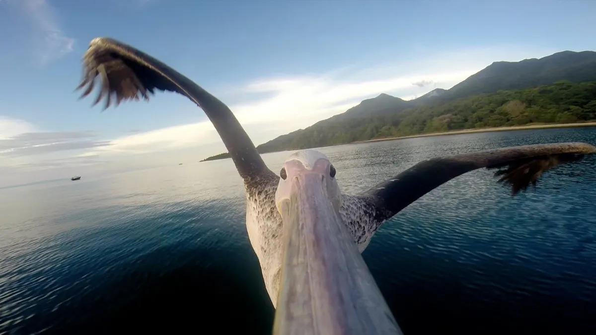 Greystoke Mahale Pelican